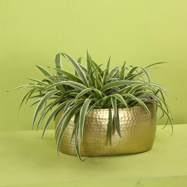 Metal planter indoors : topbrass